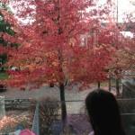 Tree M