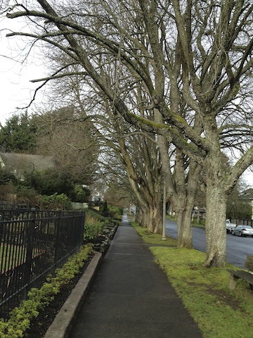 Trees and sidewalk